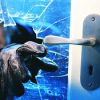 Three Burglaries Reported Since November 1st